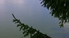 Christmas tree branches against water Stock Footage