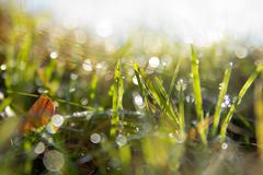 green gras after rain - stock photo
