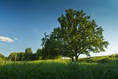 blue skys and green tree - stock photo