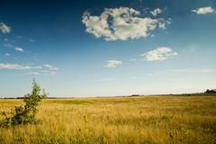 steppe and blue sky - stock photo