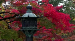 Ninnaji Lantern And Fall Color Stock Footage