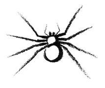 Sketched spider Stock Illustration
