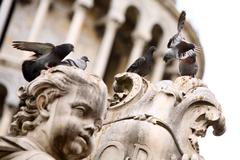 Group of pigeons on the statue - stock photo