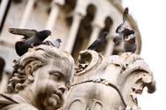 Group of pigeons on the statue Stock Photos