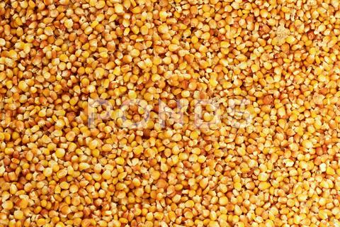 Stock photo of corn texture