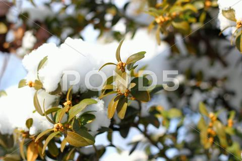 Stock photo of green buxus