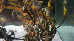 sea horses stallion - stock footage