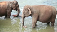 Elephants in the river Stock Footage