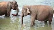 Stock Video Footage of Elephants in the river