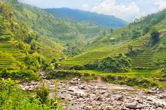 Rice field terraces Stock Photos