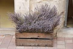 Wooden crate with lavender Stock Photos