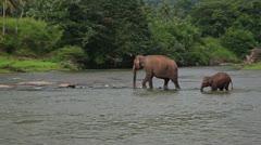 Elephants cross the river Stock Footage