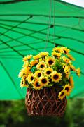 hanging artificial flowers pots - stock photo