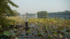 Vast lotus pool lake,Fisherman on wooden boat in beijing. Stock Footage