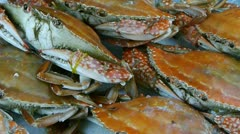 Delicious crab within dial plate.fisheries ice frozen. - stock footage