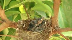Baby birds in nest Stock Footage