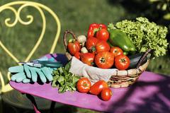 Stock Photo of some fresh vegetables in garden