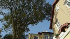 Tree with old house,blue sky & lush canopy at Europe German architecture. Stock Footage