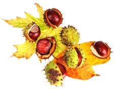 Chestnuts in peel on leaves Stock Photos