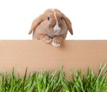 Little bunny with cardboard Stock Photos
