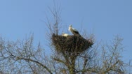 Storks Stock Footage