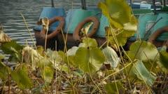 Lotus leaf pool in autumn beijing. Stock Footage