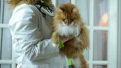 Vet veternarian animal doctor Stock Footage