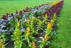 Flower landscaping Stock Photos