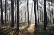 Mystic forest, sun rays entering trough the fog Stock Photos