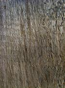 Dark bark of a tree Stock Illustration