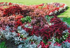 Flowerbed composition Stock Photos