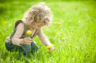 Stock Photo of beautiful child picks flowers
