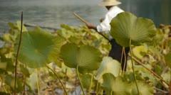 Vast lotus pool,Fisherman on boat in beijing. Stock Footage