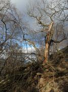 Stock Photo of tree