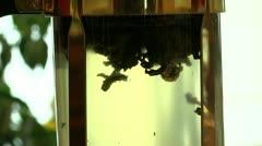 Preparation of herbal tea Stock Footage