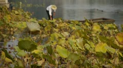 Vast lotus pool,Fisherman on boat clean lake in beijing. Stock Footage