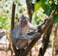 artful monkey sitting on the tree - stock photo