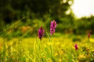 Purple blossom Stock Photos