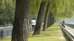 Many willow greenway & tree trunks relying on Beijing Forbidden City. Stock Footage
