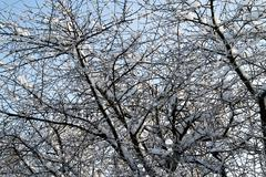 The trees in the snow - stock photo