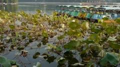 Vast lotus leaf pool in autumn beijing & lake bridge railings.fisherman on boat Stock Footage