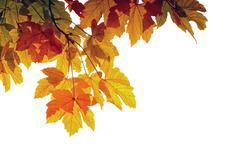 autumn laeves - stock photo