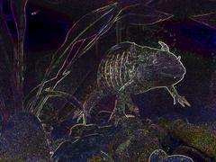 fauna I - stock photo