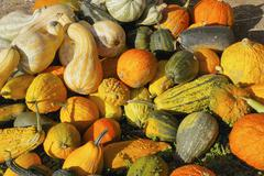 squash, gourds, and pumpkins - stock photo