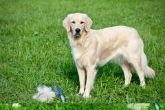 Care for dog hair Stock Photos