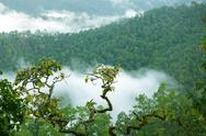 Stock Photo of rainforest morning fog
