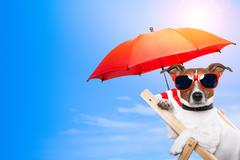 Dog sunbathing on a deck chair with empty space on side Stock Illustration