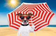 Stock Illustration of dog summer