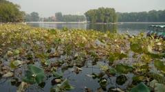 Vast lotus leaf pool pier in autumn beijing.many toy boat. Stock Footage