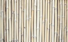 bambus background - stock photo